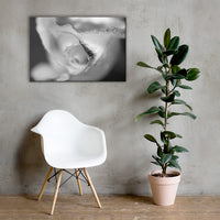 Infrared Rose Black and White Floral Nature Canvas Wall Art Prints 24×36 - PIPAFINEART
