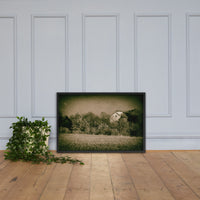 Abandoned Barn In The Trees Vintage Framed Photo Paper Wall Art Prints Black / 24×36 - PIPAFINEART