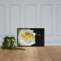 Glowing Rose 2 Floral Nature Photo Framed Wall Art Print Black / 24×36 - PIPAFINEART