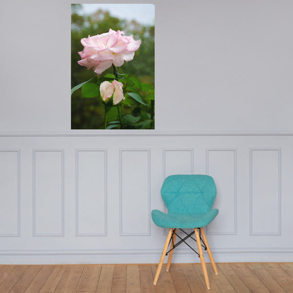 Admiration Pink Rose Floral Nature Photo Loose Unframed Wall Art Prints 24×36 - PIPAFINEART
