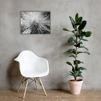 Center of Clematis Black and White Floral Nature Canvas Wall Art Prints 18×24 - PIPAFINEART