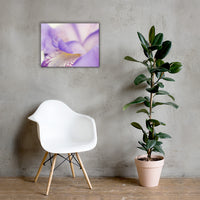 Soft Focus Iris Petals Floral Nature Canvas Wall Art Prints 18×24 - PIPAFINEART
