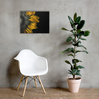 Backside of Sunflower Floral Nature Canvas Wall Art Prints 18×24 - PIPAFINEART