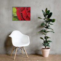 Bold and Beautiful Floor Floral Nature Canvas Wall Art Prints 18×24 - PIPAFINEART
