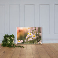 Philadelphia Fleabane Cluster Softened Floral Nature Photo Framed Wall Art Print White / 24×36 - PIPAFINEART
