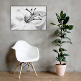High Key Lily Black and White Floral Nature Canvas Wall Art Prints 24×36 - PIPAFINEART