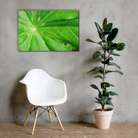 Peaceful Greenery Botanical Nature Canvas Wall Art Prints 24×36 - PIPAFINEART