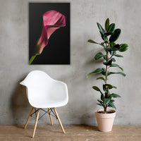 Pink Calla Lily Flower on Black Floral Nature Canvas Wall Art Prints 24×36 - PIPAFINEART