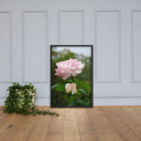 Admiration - Pink Rose Floral Nature Photo Framed Wall Art Print Black / 24×36 - PIPAFINEART