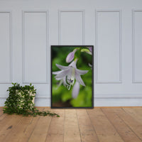 Hosta Bloom Floral Nature Photo Framed Wall Art Print Black / 24×36 - PIPAFINEART