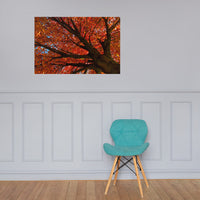 Shimmering Orange Botanical Nature Photo Loose Unframed Wall Art Prints 24×36 - PIPAFINEART