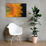 Close-up Sunflower Floral Nature Canvas Wall Art Prints 24×36 - PIPAFINEART