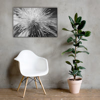 Center of Clematis Black and White Floral Nature Canvas Wall Art Prints 24×36 - PIPAFINEART