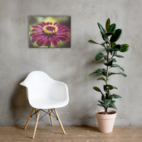 Moody Young-And-Old Age Pink Zinnia Floral Nature Canvas Wall Art Prints 18×24 - PIPAFINEART