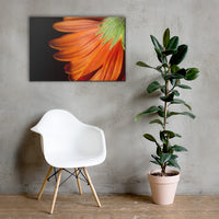 Petite Petals Floral Nature Canvas Wall Art Prints 24×36 - PIPAFINEART