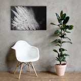 Fern Leaf In the Sunlight Black and White Floral Nature Canvas Wall Art Prints 24×36 - PIPAFINEART
