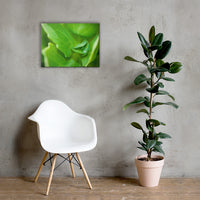 Cupped Droplet Botanical Nature Canvas Wall Art Prints 18×24 - PIPAFINEART