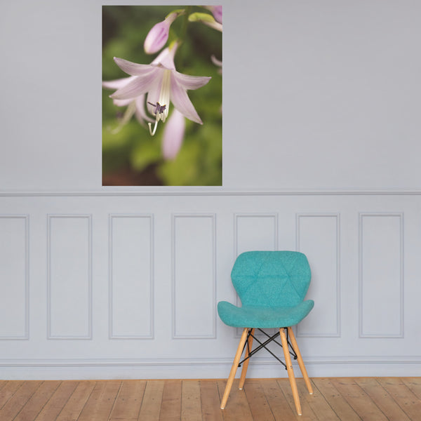 Softened Hosta Bloom Floral Nature Photo Loose Unframed Wall Art Prints 24×36 - PIPAFINEART