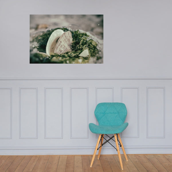 Seaweed and Shells Coastal Nature Photo Loose Unframed Wall Art Prints 24×36 - PIPAFINEART