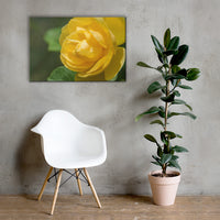 Friendship Rose Floral Nature Canvas Wall Art Prints 24×36 - PIPAFINEART