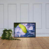 Actias Luna Larvae on Hydrangea Floral Nature Photo Framed Wall Art Print Black / 24×36 - PIPAFINEART