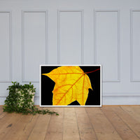 Brilliant Yellow Botanical Nature Photo Framed Wall Art Print White / 24×36 - PIPAFINEART
