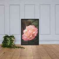 Pink and White Softened Rose Floral Nature Photo Framed Wall Art Print Black / 24×36 - PIPAFINEART