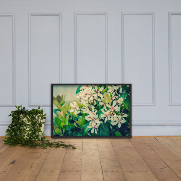 Indian Hawthorn Shrub in Bloom Colorized Floral Nature Photo Framed Wall Art Print Black / 24×36 - PIPAFINEART