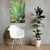 Succulent 2 Botanical Nature Canvas Wall Art Prints 24×36 - PIPAFINEART