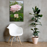 Admiration Pink Rose Floral Nature Canvas Wall Art Prints 24×36 - PIPAFINEART