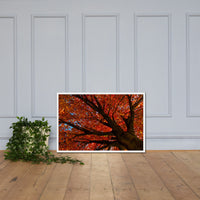 Shimmering Orange Botanical Nature Photo Framed Wall Art Print White / 24×36 - PIPAFINEART