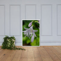 Hosta Bloom Floral Nature Photo Framed Wall Art Print White / 24×36 - PIPAFINEART