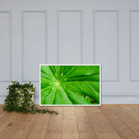 Peaceful Greenery Botanical Nature Photo Framed Wall Art Print White / 24×36 - PIPAFINEART