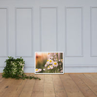 Philadelphia Fleabane Cluster Softened Floral Nature Photo Framed Wall Art Print White / 18×24 - PIPAFINEART