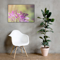Spider Flower in Glory Light With Spotted Moth Floral Nature Canvas Wall Art Prints 24×36 - PIPAFINEART