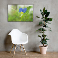 Asiatic Dayflower Floral Nature Canvas Wall Art Prints 24×36 - PIPAFINEART