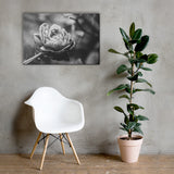 Perfect Petals High Contrast Black and White Floral Nature Canvas Wall Art Prints 24×36 - PIPAFINEART
