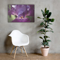 Glowing Iris Moody Midnight Floral Nature Canvas Wall Art Prints 24×36 - PIPAFINEART