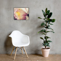 Close-up of Orchid Floral Nature Canvas Wall Art Prints 16×20 - PIPAFINEART
