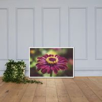 Moody Young-And-Old Age Pink Zinnia Flower Bloom Floral Nature Photo Framed Wall Art Print White / 24×36 - PIPAFINEART