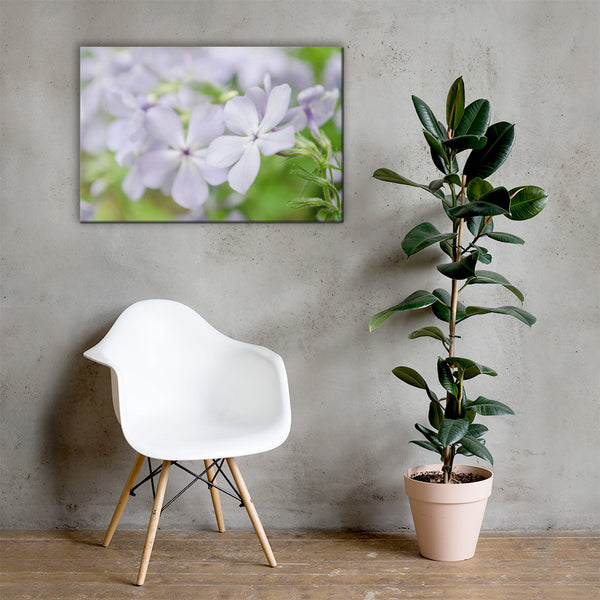 Soft Focus Phlox Carolina Floral Nature Canvas Wall Art Prints 24×36 - PIPAFINEART