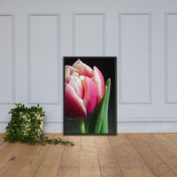 Pink and White Tulip Floral Nature Photo Framed Wall Art Print Black / 24×36 - PIPAFINEART