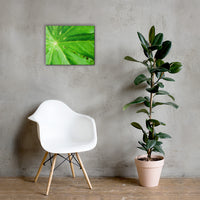 Peaceful Greenery Botanical Nature Canvas Wall Art Prints 16×20 - PIPAFINEART