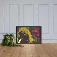 Dramatic Backside of Sunflower Grain Floral Photo Framed Wall Art Print Black / 24×36 - PIPAFINEART