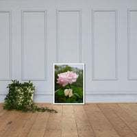 Admiration - Pink Rose Floral Nature Photo Framed Wall Art Print White / 18×24 - PIPAFINEART