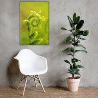 Nature's Perfection Botanical Nature Canvas Wall Art Prints 24×36 - PIPAFINEART