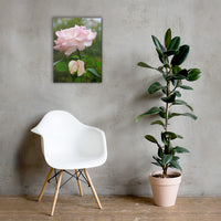 Admiration Pink Rose Floral Nature Canvas Wall Art Prints 18×24 - PIPAFINEART