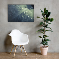 Rain Dropping on Canna Leaf Botanical Nature Canvas Wall Art Prints 24×36 - PIPAFINEART