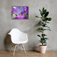 Glowing Iris Floral Nature Canvas Wall Art Prints 18×24 - PIPAFINEART