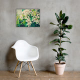 Indian Hawthorn Shrub in Bloom Colorized Floral Nature Canvas Wall Art Prints 18×24 - PIPAFINEART
